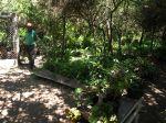 Smutsville indigenous tree nursery - Sedgefield, Southern Cape
